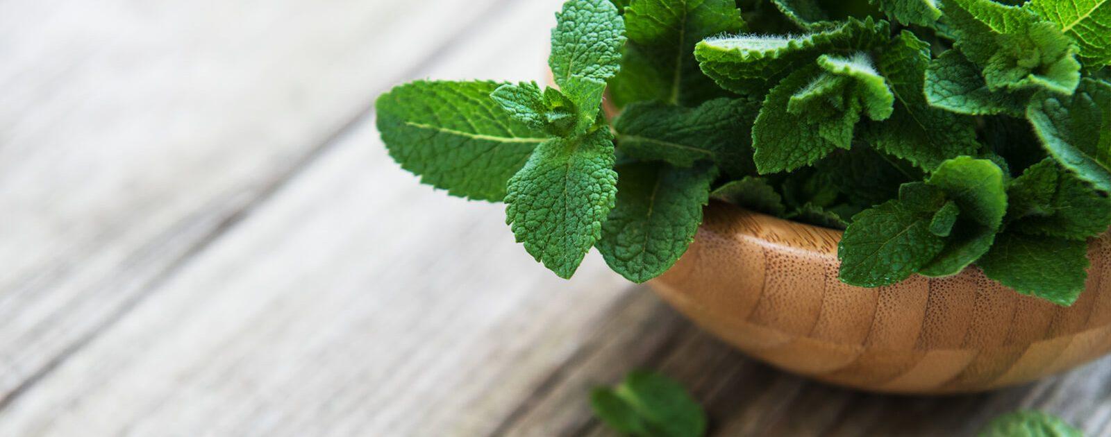 Pfefferminzblätter in Großaufnahme; Die Heilpflanze gilt als beliebtes Hausmittel gegen Magenbeschwerden.