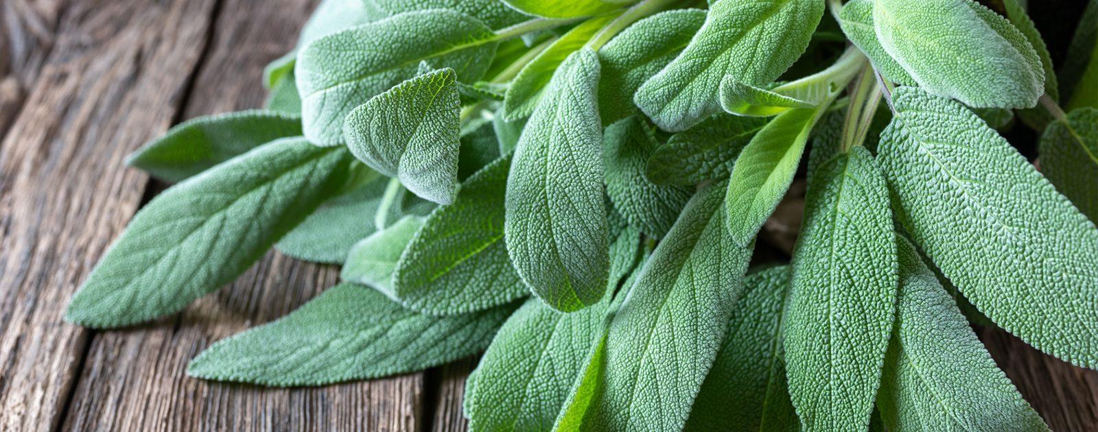 Ein Bündel der Heilpflanze Salbei, die beruhigend bei Bauchkoliken wirkt, liegt auf einem rustikalen Holztisch.