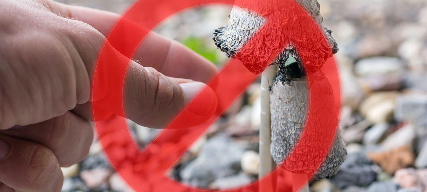 Mann greift nach Giftpilz. Ein Warn-Symbol warnt davor, da es bei Verzehr zur Pilzvergiftung kommen kann.